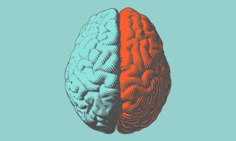 Compreender as diferenças de género do cérebro fará parte das competências essenciais de um líder